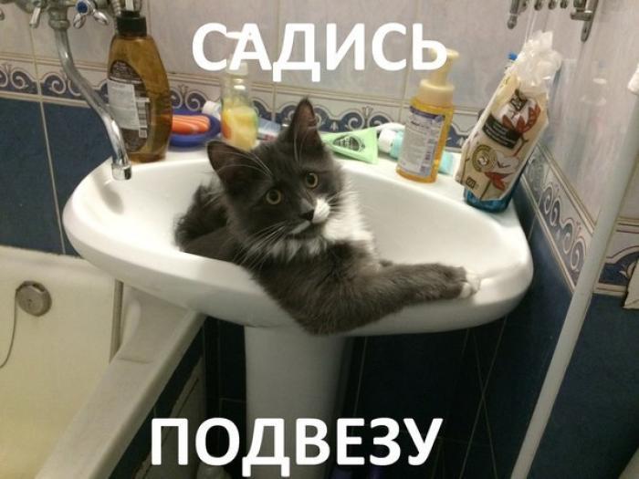 кот карпала